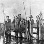 Clausen-eels-Jack-Vince-Dave-Vince-1947