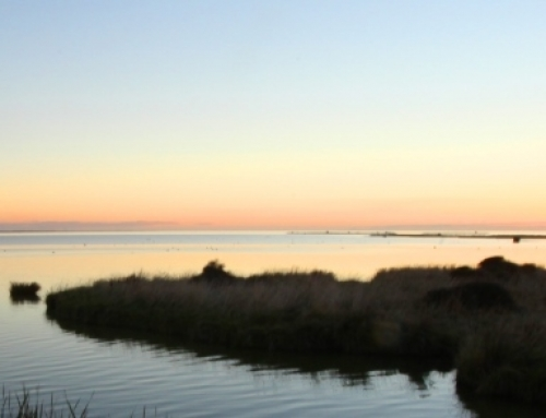 Should Te Waihora/Lake Ellesmere be exempt from National Standards?