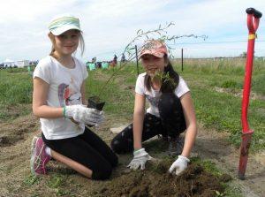 lincoln-kdp-planting-2-web