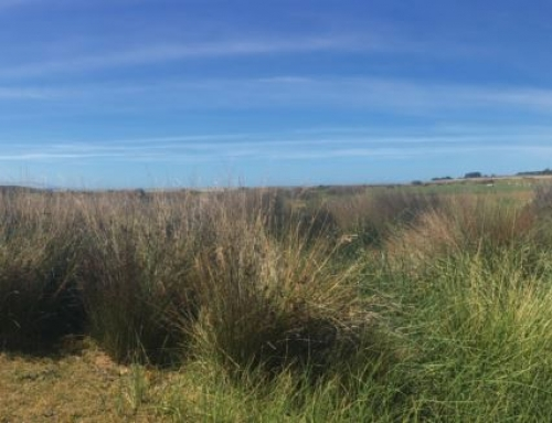 2017 Te Waihora Bird Census – the results are in!