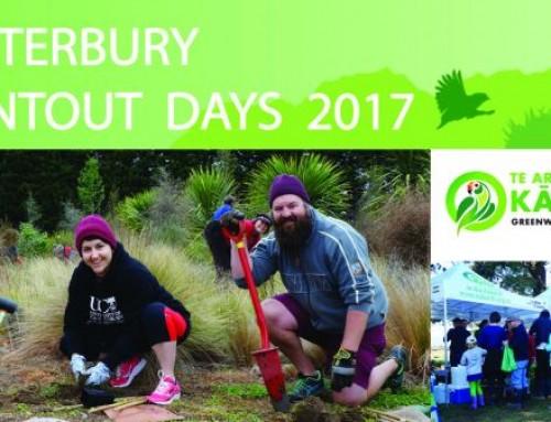 Canterbury Plantout 2017