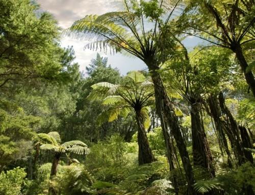 34 hectares of kahikatea forest next to Te Waihora/Lake Ellesmere